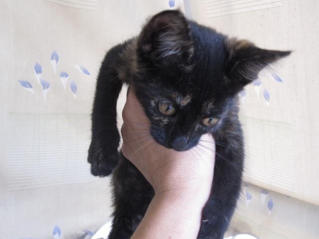 Γατουλα με σπασμενη λεκανη!!!  (Τα γατακια της γειτονισσας...) - Σελίδα 5 Img_0936