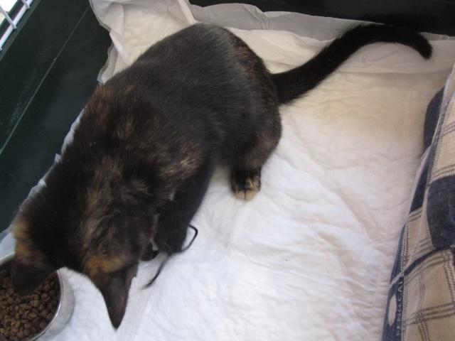 Γατουλα με σπασμενη λεκανη!!!  (Τα γατακια της γειτονισσας...) - Σελίδα 5 Img_0938