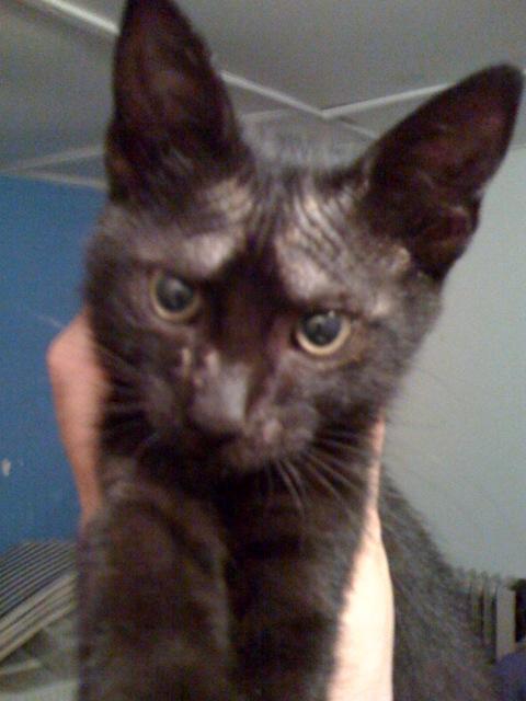 Γατουλα με σπασμενη λεκανη!!!  (Τα γατακια της γειτονισσας...) - Σελίδα 6 Kirki10