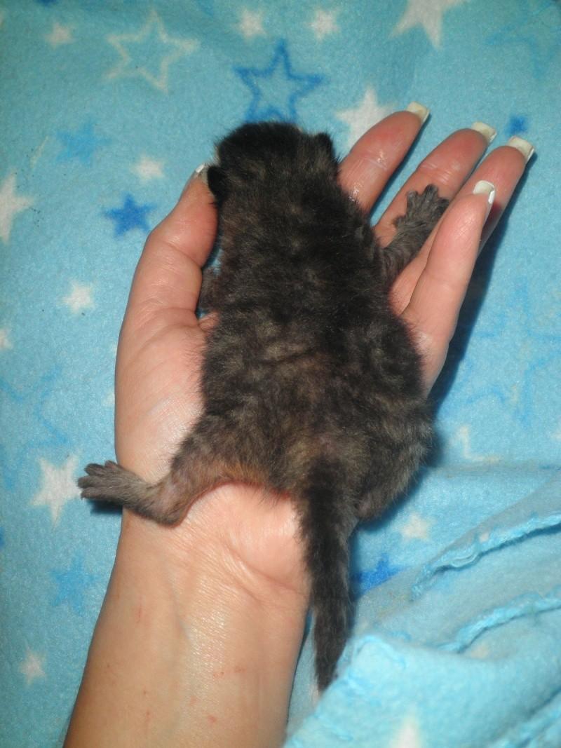 Ζητειται μαμα για τιγρακι!!! P4270611