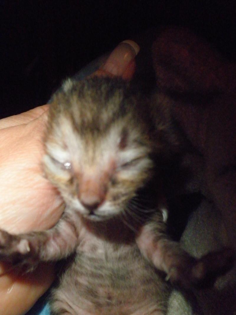 Ζητειται μαμα για τιγρακι!!! - Σελίδα 2 P4290615