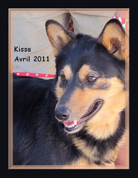 Kissa x nordique, 3 ans, REF Espagne, adoptable en Suisse DECEDEE Kissa_10