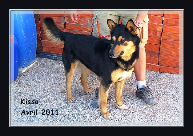Kissa x nordique, 3 ans, REF Espagne, adoptable en Suisse DECEDEE Kissa_11