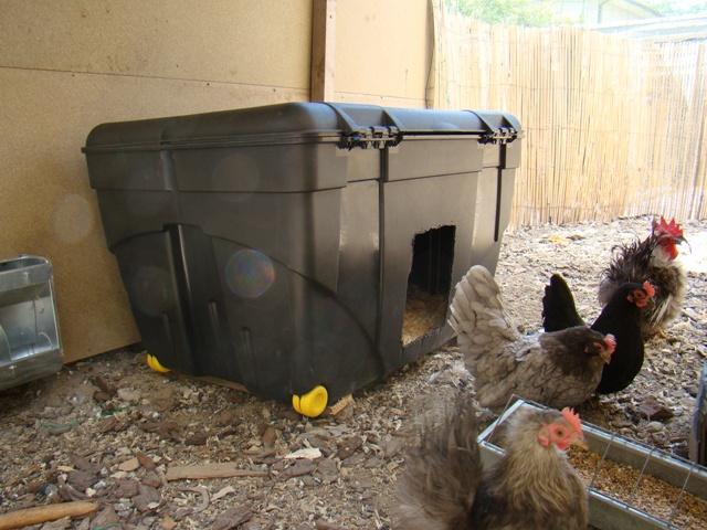 L'élevage de zimetzoc Dsc03625