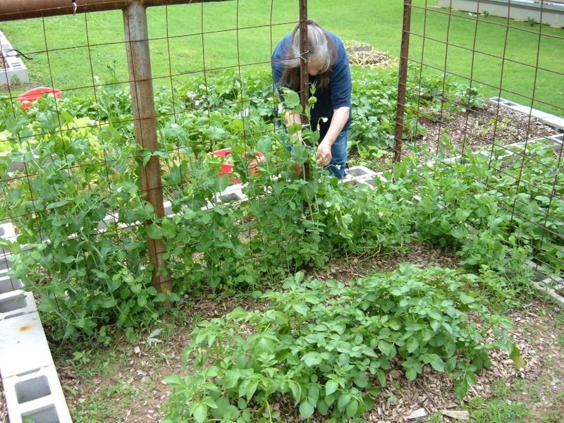 Garden 2011 16110