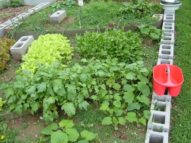 Garden 2011 16610