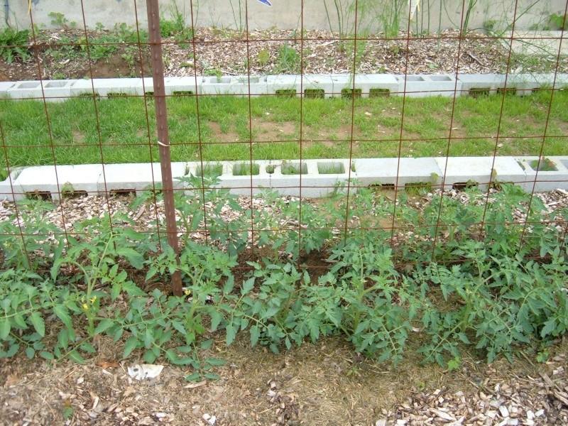 Garden 2011 17510