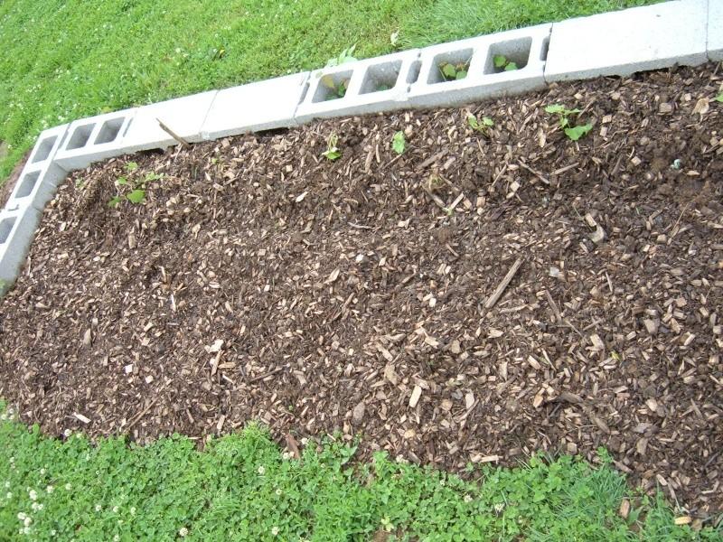 Garden 2011 18210