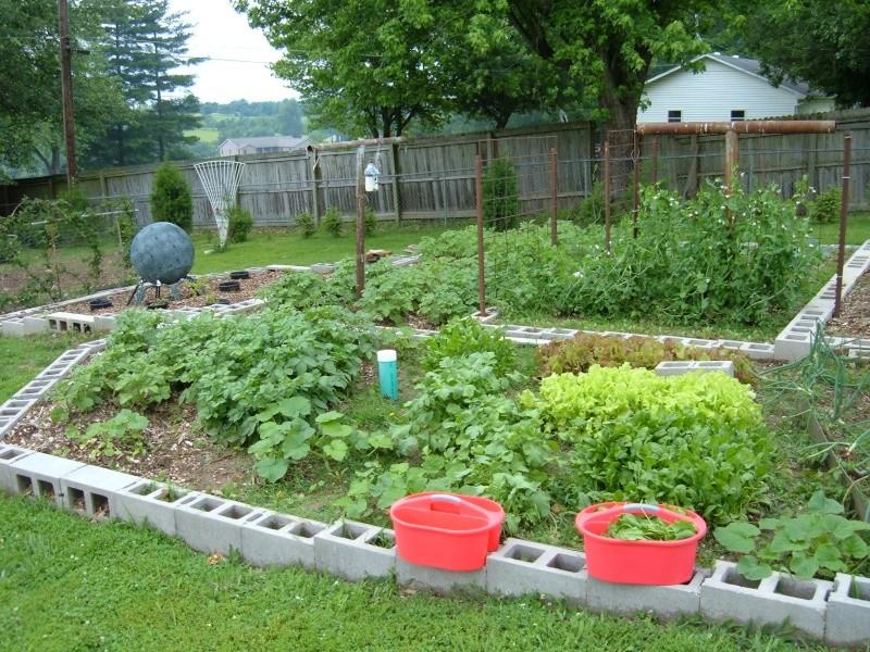 Garden 2011 18410