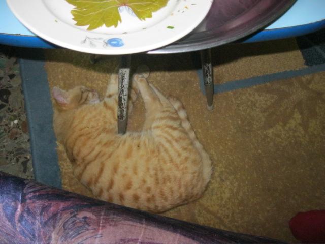 Долма. Азербайджанская кухня Copy_o13