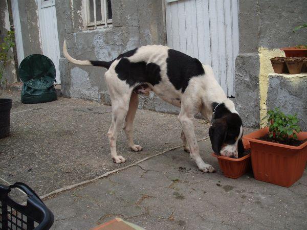 Nouvelles des chiens partis le 9 mai pour l'allemagne et l'autriche Ferdin11