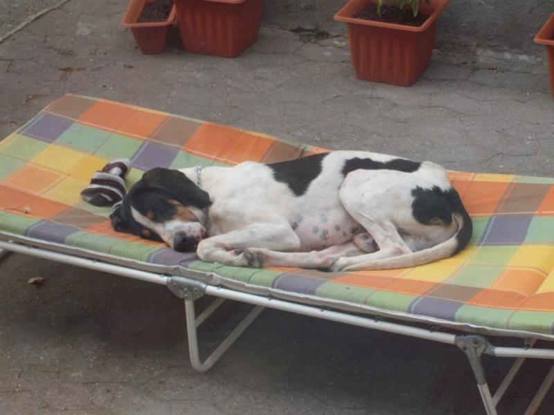 Nouvelles des chiens partis le 9 mai pour l'allemagne et l'autriche Ferdin12