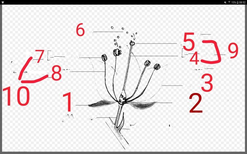 Un peu de botanique  #1 vue en coupe d'une fleur...... 2018-011