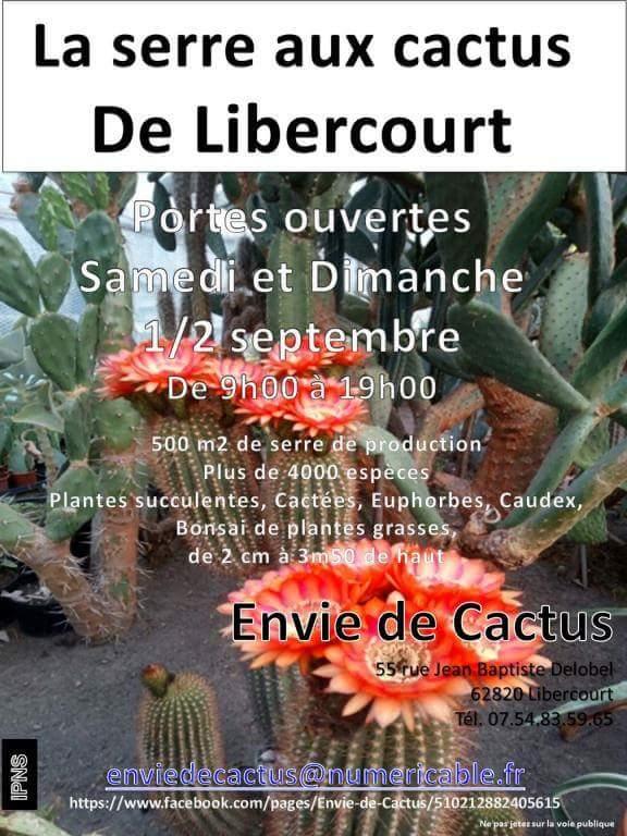 envie de cactus 40311411