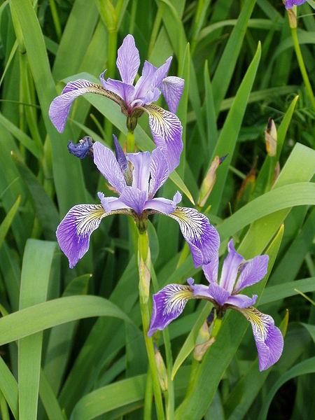 plante a identifier 1370 450px-10