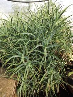 envie de cactus Img_2020