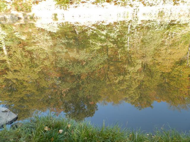 Vote pour le concours photo d'automne  Reflet11
