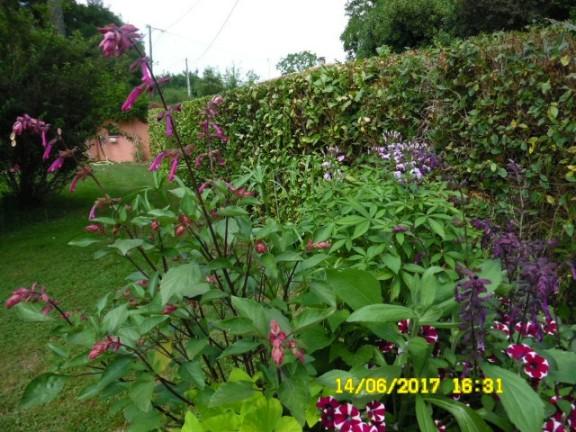 plante a identifier 1387 bis Sam_1410