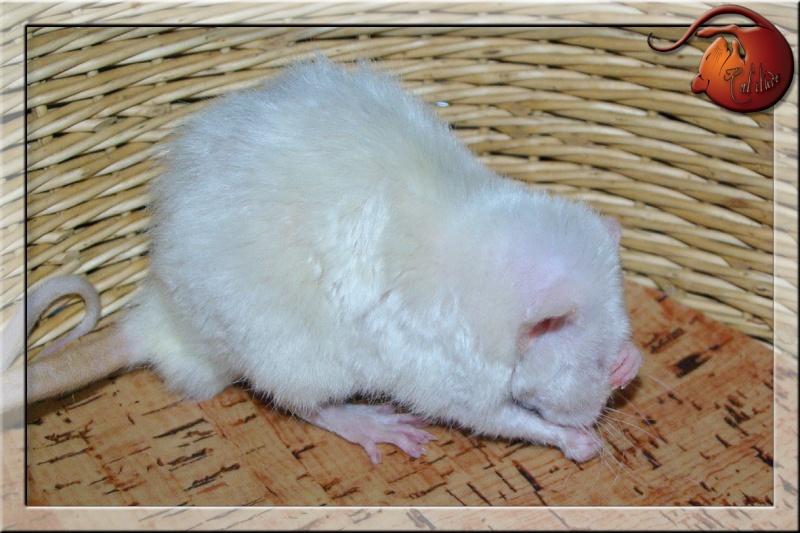 Les rats en terrario et en dehors - Page 2 Imgp4726