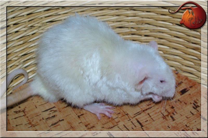 Les rats en terrario et en dehors - Page 2 Imgp4727