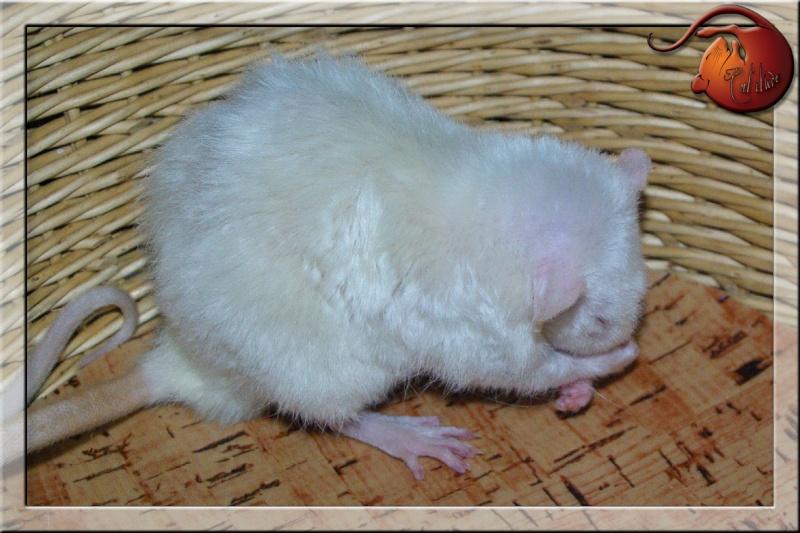 Les rats en terrario et en dehors - Page 2 Imgp4728