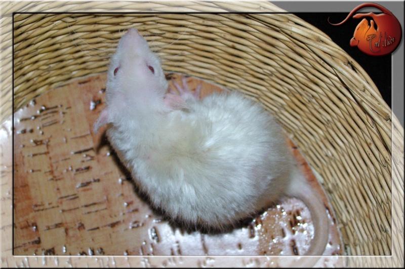 Les rats en terrario et en dehors - Page 2 Imgp4810