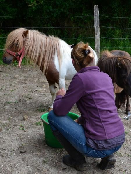 Macho de l'Espoir, type toy horse hongre pie alezan  Dsc_0021