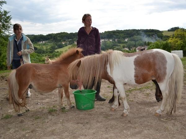 Macho de l'Espoir, type toy horse hongre pie alezan  Dsc_0023