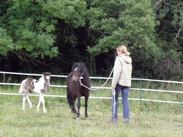 Jivana de l'Espoirs, Welsh baie et Betty Boop pouliche pie noire - Page 6 P5270120