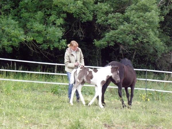 Jivana de l'Espoirs, Welsh baie et Betty Boop pouliche pie noire - Page 6 P5270121