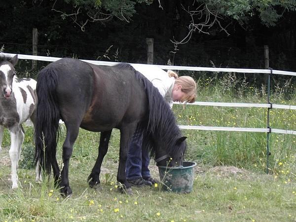 Jivana de l'Espoirs, Welsh baie et Betty Boop pouliche pie noire - Page 6 P5270130