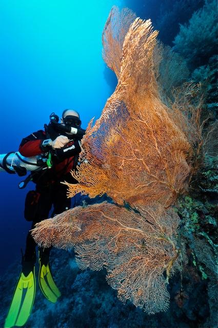 CR  croisière epaves profondes, brothers,daedalus,ephingstone mer rouge avec ALDO FERRUCCI 25 sept au 02 octobre 2010 Dsc_4911