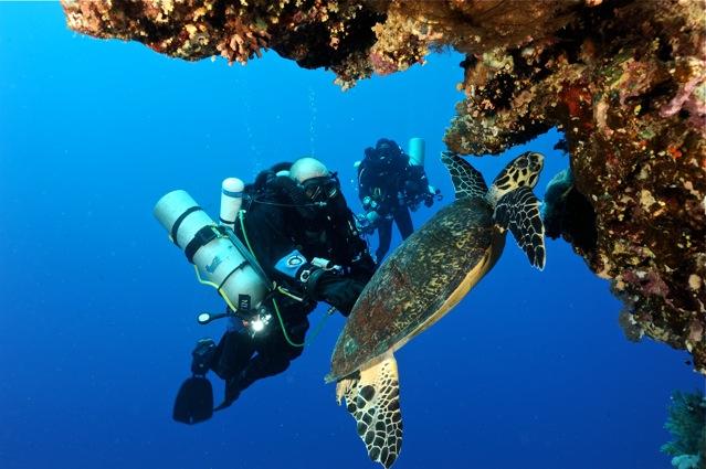 CR  croisière epaves profondes, brothers,daedalus,ephingstone mer rouge avec ALDO FERRUCCI 25 sept au 02 octobre 2010 Dsc_4912