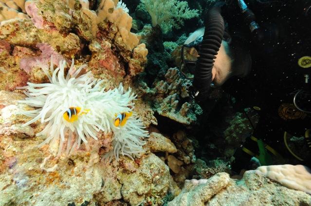 CR  croisière epaves profondes, brothers,daedalus,ephingstone mer rouge avec ALDO FERRUCCI 25 sept au 02 octobre 2010 Dsc_5210