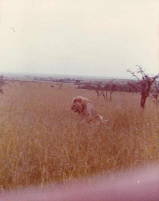 Histoire de lions. Img21