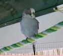 JEUX et LIEUX FAVORIS de nos oiseaux 100_110