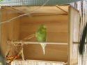 JEUX et LIEUX FAVORIS de nos oiseaux Coin_d10