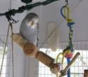 JEUX et LIEUX FAVORIS de nos oiseaux Ptigri11