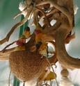 JEUX et LIEUX FAVORIS de nos oiseaux Z_coco13