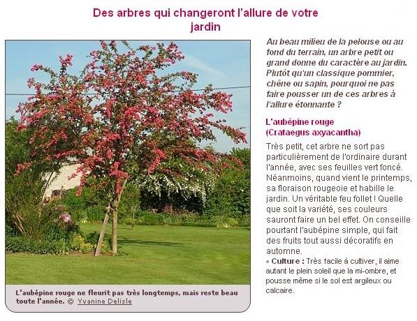 Le plus bel arbre du jardin A18