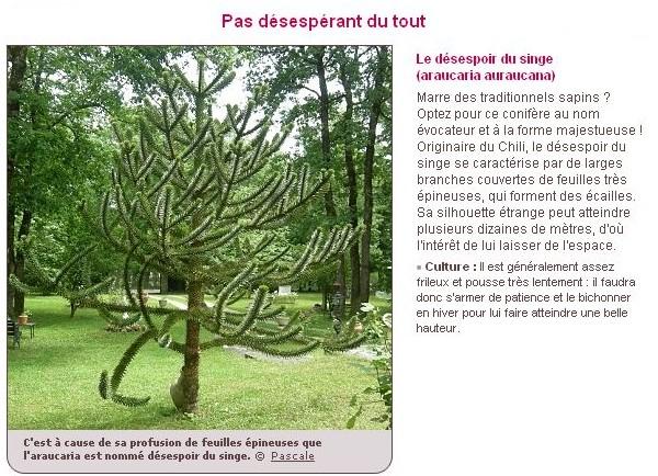 Le plus bel arbre du jardin B14