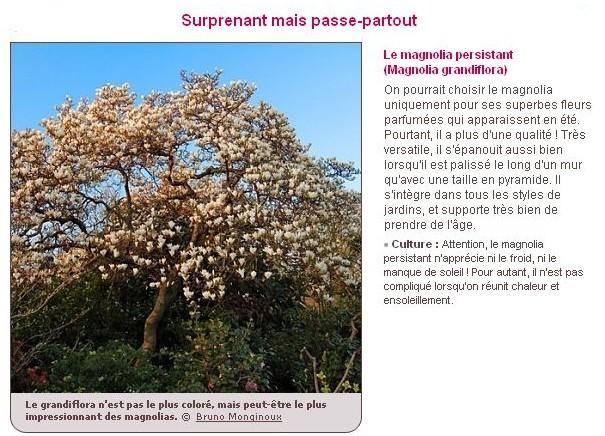 Le plus bel arbre du jardin E10