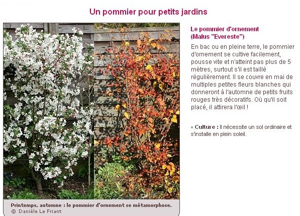 Le plus bel arbre du jardin G10