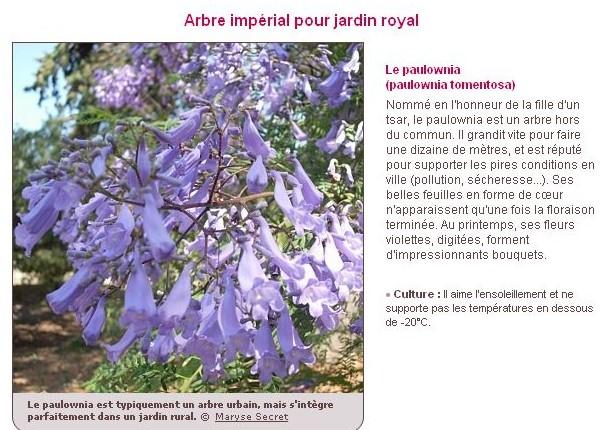Le plus bel arbre du jardin H10