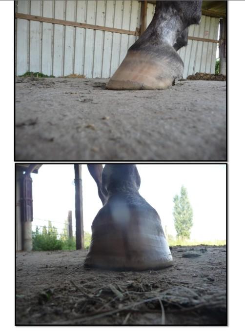 Et les pieds ??? - Page 5 Ant_g10