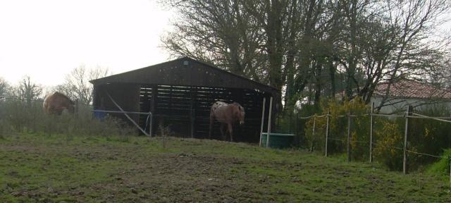 Construction d'un abri pour chevaux - Page 2 Copie_13