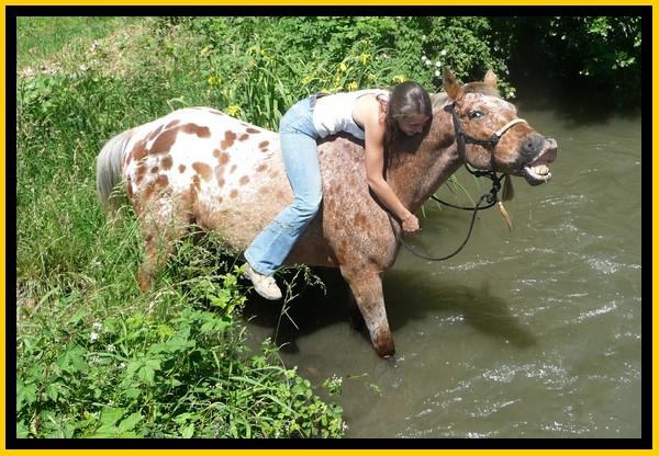 Les chevaux et l'eau, venez votez... Copie_15