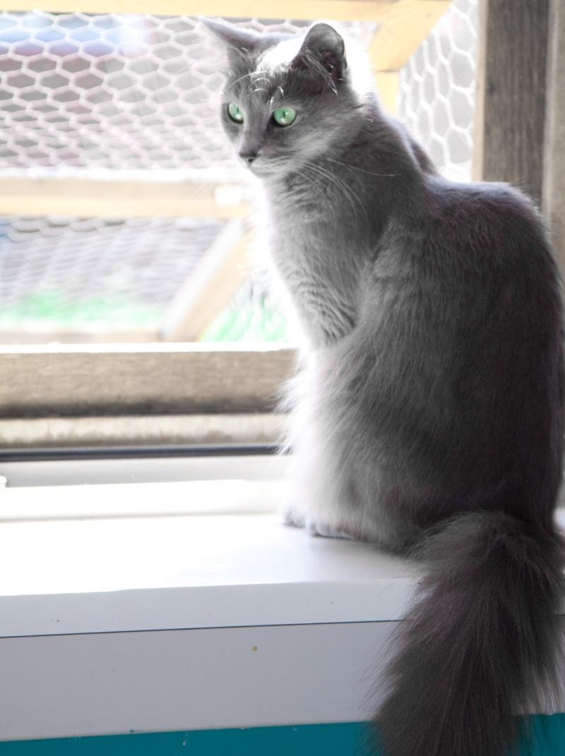My cats- sept 2010 Pegush11