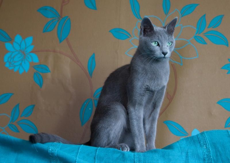 My cats- sept 2010 Sohvi-11