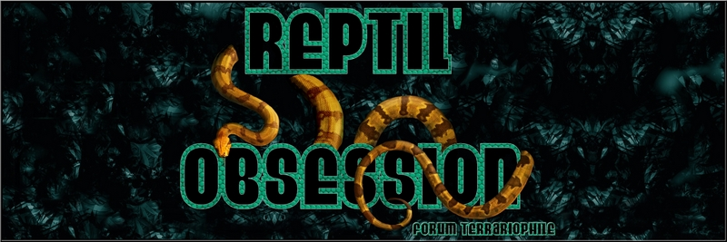 REPTIL OBSESSION